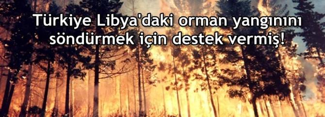 Türkiye iyi etti ama Bodrum'da da 300 hektar kül oldu