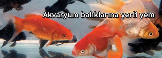 Akvaryum balıklarına yerli yem