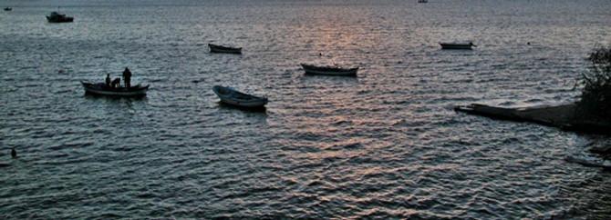 Ağlarına 16 köpek balığı takıldı