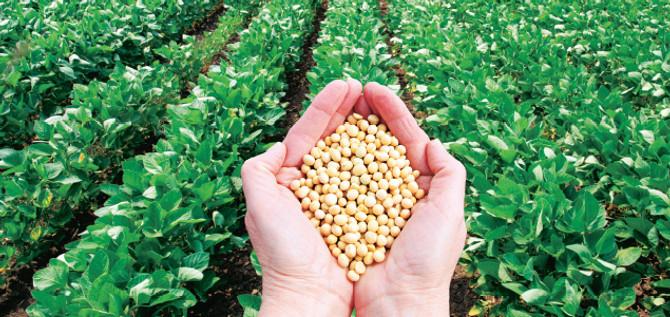Yerli tohum üretiminde büyük artış