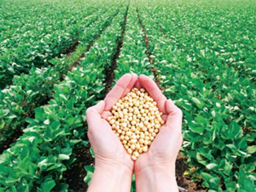 Türkiye kendi yetiştirdiği tohumları kullanıyor