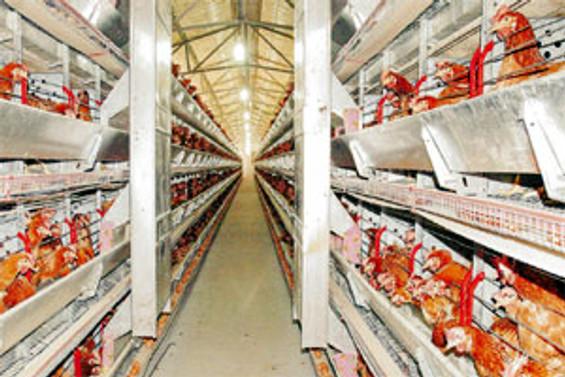 Beyaz et ihracatında yüzde 30 artış