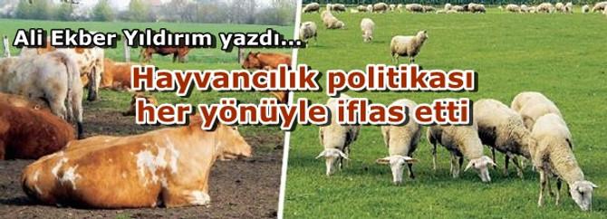 Hayvancılık politikası her yönüyle iflas etti