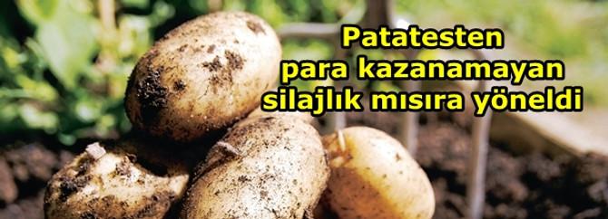 Patatesten para kazanamayan silajlık mısıra yöneldi