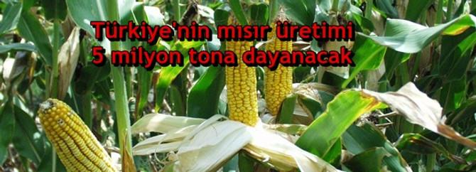 Türkiye'nin mısır üretimi 5 milyon tona dayanacak