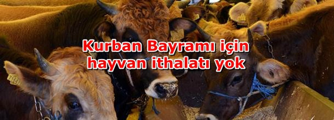 Kurban Bayramı için hayvan ithalatı yok