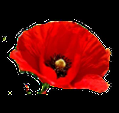 Çama talep düştü, yeni yılın gözdesi kırmızı çiçekler