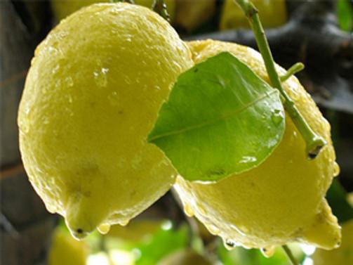 Doğu Marmara'nın zam şampiyonu limon