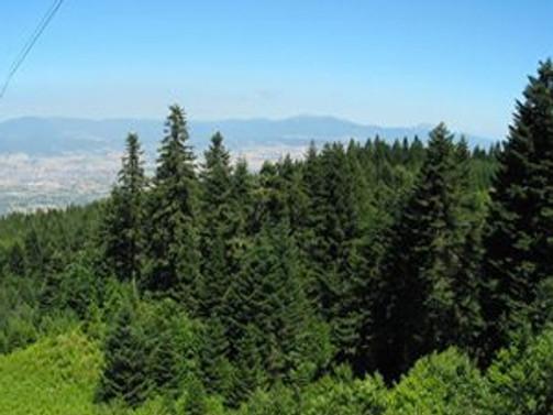 İstanbul'un yüzde 49'u orman