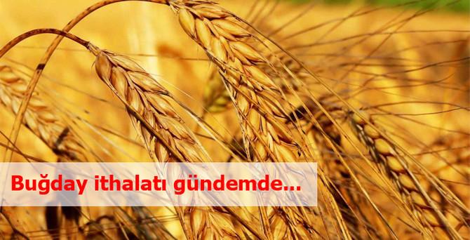 Buğday ithalatı gündemde...