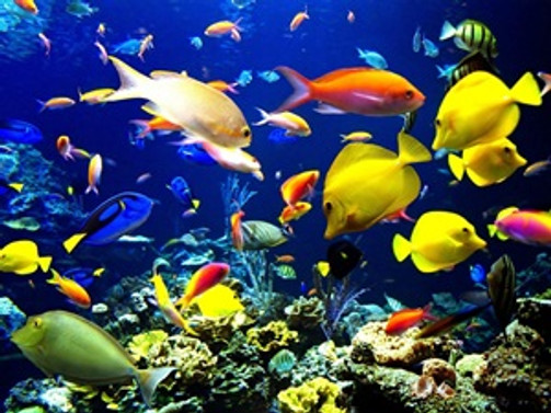 3 milyon dolarlık kafes ve akvaryum hayvanı ithal ettik