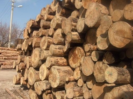 Ağaç ve orman ürünleri ihracatı arttı