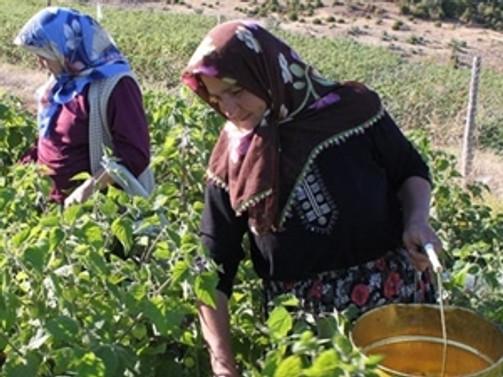 Tarımda kadın patronlar geliyor
