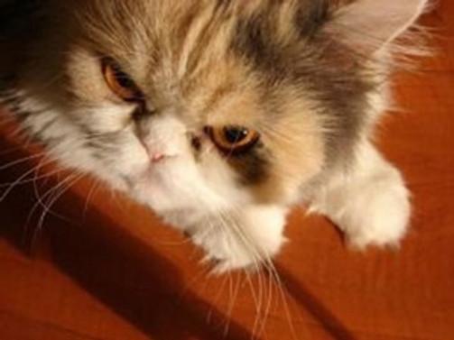 ABD'de 'evcil kedi' dehşeti