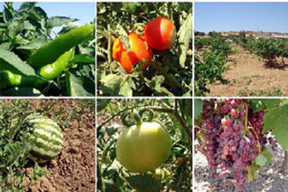 GDO'lu ürünler organik tarımda kullanılmayacak