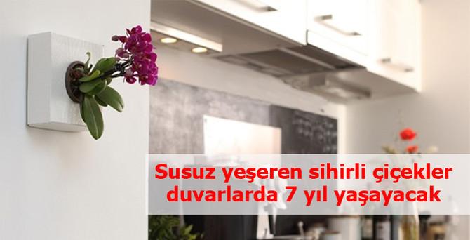 Susuz yeşeren sihirli çiçekler duvarlarda 7 yıl yaşayacak