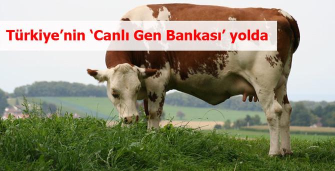 Türkiye'nin 'Canlı Gen Bankası' yolda