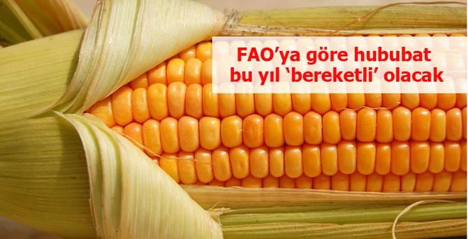 FAO'ya göre hububat bu yıl bereketli olacak