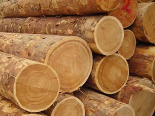 Orman ürünleri ihracatı 2 milyar doları aştı
