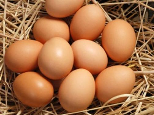 Yumurta ihracatında 'tek yön' sorunu