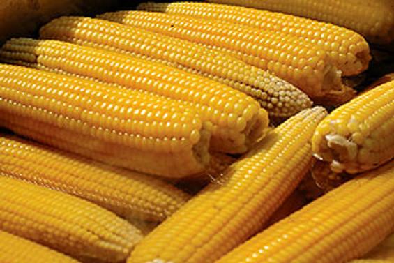 TMO, taahhütname karşılığı mısır alımına başladı