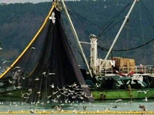'Balıkçılığın geleceği koruma alanlarıyla mümkün'