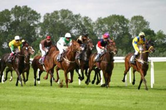 Garanti Masters'dan atlar için sigorta