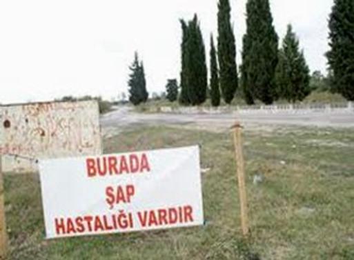 Marmara ve Ege de şaptan ari hale getiriliyor