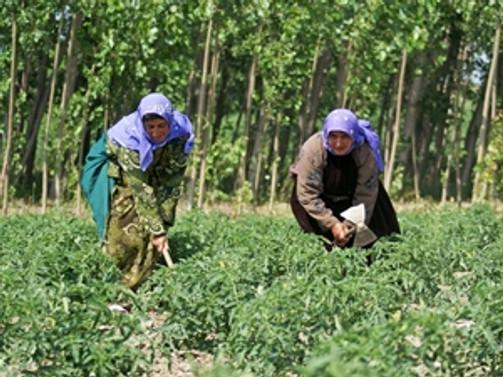 'Göç', tarımla önlenecek
