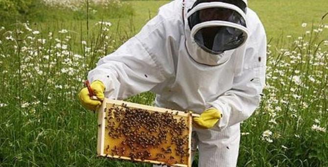 Obama'dan arılar için 'özel tim'