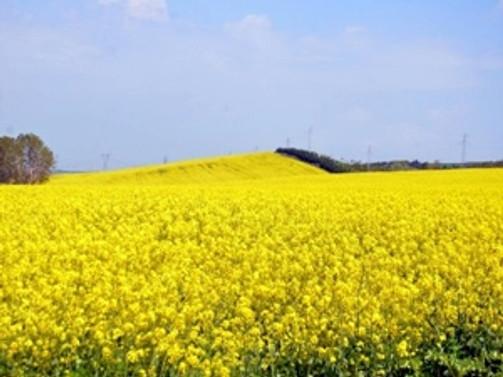 Tekirdağ'da 600 bin dekar arazi hasar gördü