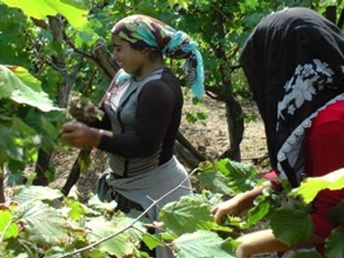 Düzce'de mevsimlik işçi yevmiyeleri belli oldu