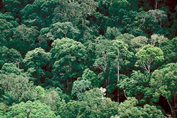 idefix.com'dan Aziz Nesin adına hatıra ormanı
