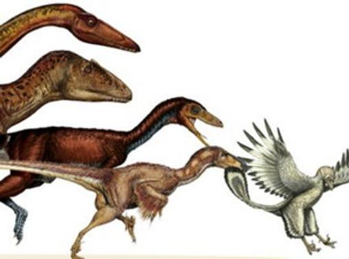 '163 kiloluk dinozor, 800 gramlık kuşa dönüştü'