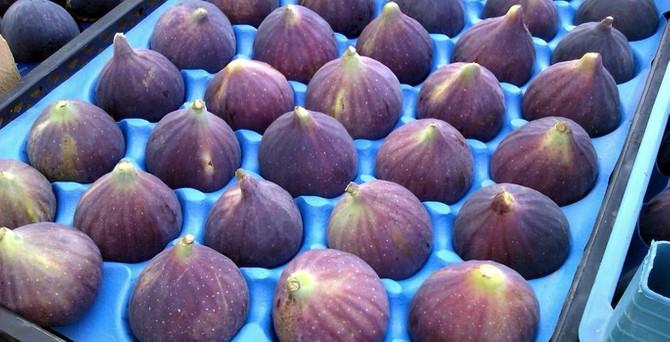 """Bursa siyah inciri""nde ihracat hedefi yükseldi"