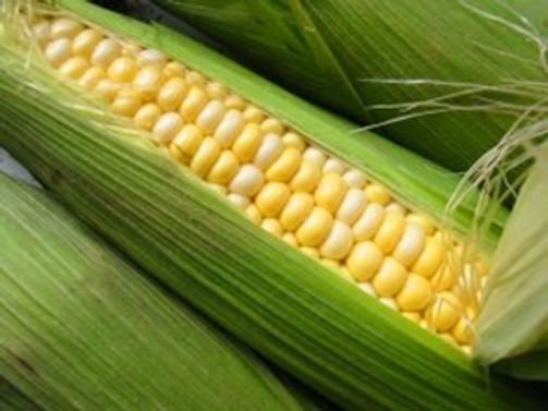 'Türkiye mısır ithalatçısı olmamalı'