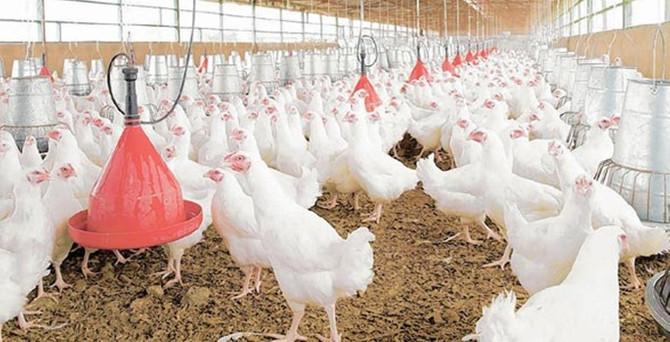 Beyaz et sektörü büyümeye devam ediyor