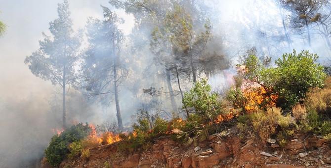 Muğla'daki orman yangını kontrol altına alındı