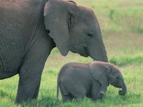'Fillerin nesli 100 yılda tükenebilir'