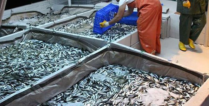 Balıkçılar av sezonuna keyifsiz başlıyor