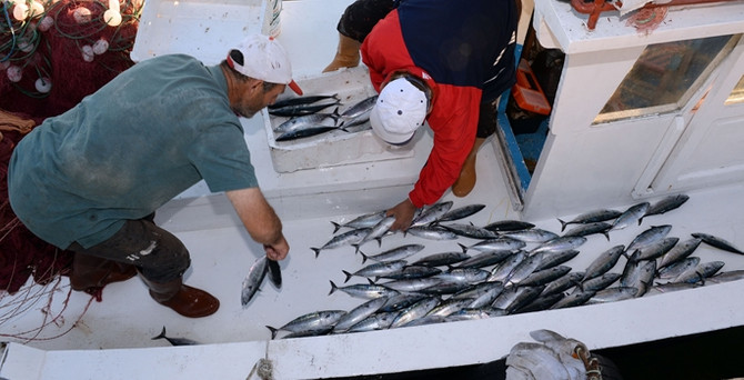 Balık avlama yasağı yarın başlıyor