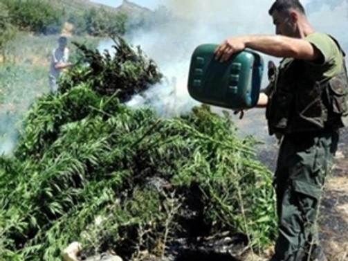 Afganistan'da 21 ton uyuşturucu imha edildi