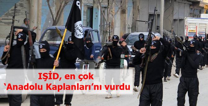 IŞİD, en çok 'Anadolu Kaplanları'nı vurdu