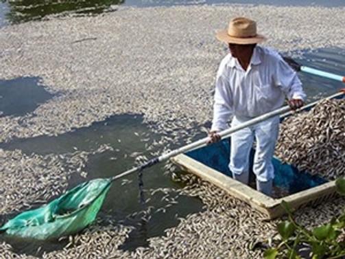 Meksika'da 53 ton balık kıyıya vurdu