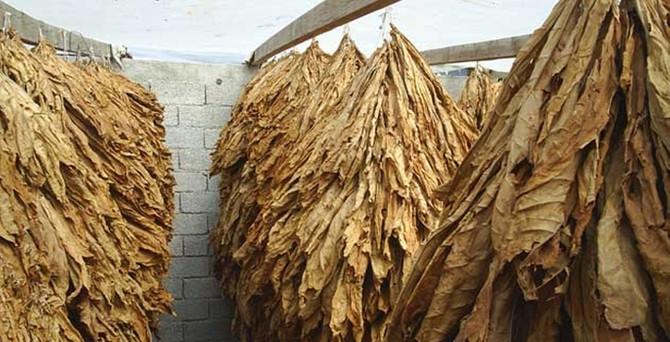 Tütün üretiminde belge bedeli arttı