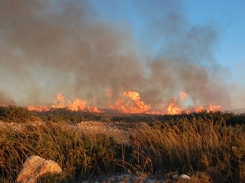 Didim'deki yangında 15 hektar zarar gördü