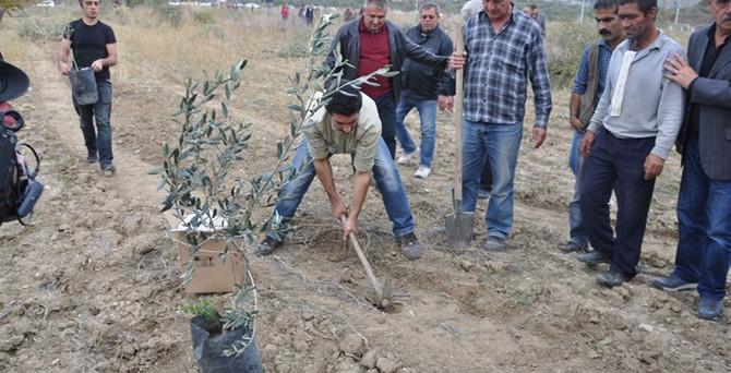 Kesilen 5 bin ağaç yerine yeni fidanlar diktiler