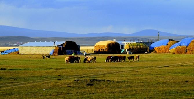 Çiftliklerin satış fiyatı yüzde 36 arttı