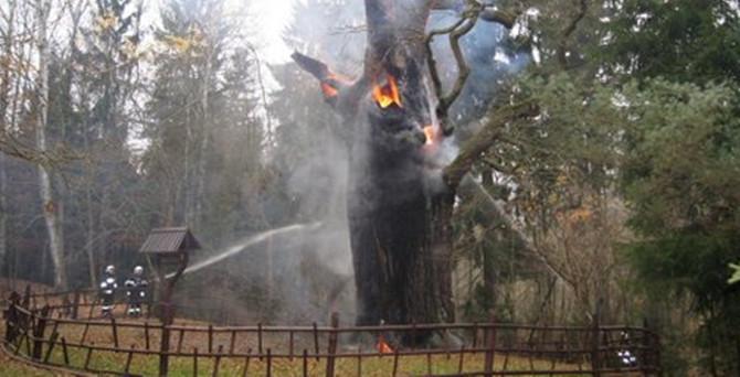 750 yıllık meşe yangından zarar gördü