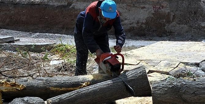 Yalova'da 158 ağaç kesiliyor!